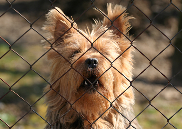 Keeping a Leash on Dog Issues in Your Association